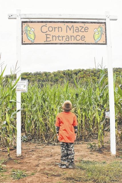 Get lost in Whistle Pig Pumpkin Farm's corn mazes