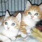 Stewie and Stanley are at Blue Chip Farm Animal Refuge awaiting a fur-ever home