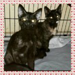 Paige and Piper are at Blue Chip Farm awaiting their fur-ever home