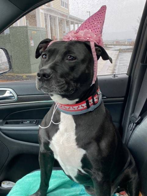 Uma, also known as Uma Goodness Ginochetti, celebrated her 'birthday' on Tuesday, the seventh anniversary of the day her family adopted her.                                  Submitted photo